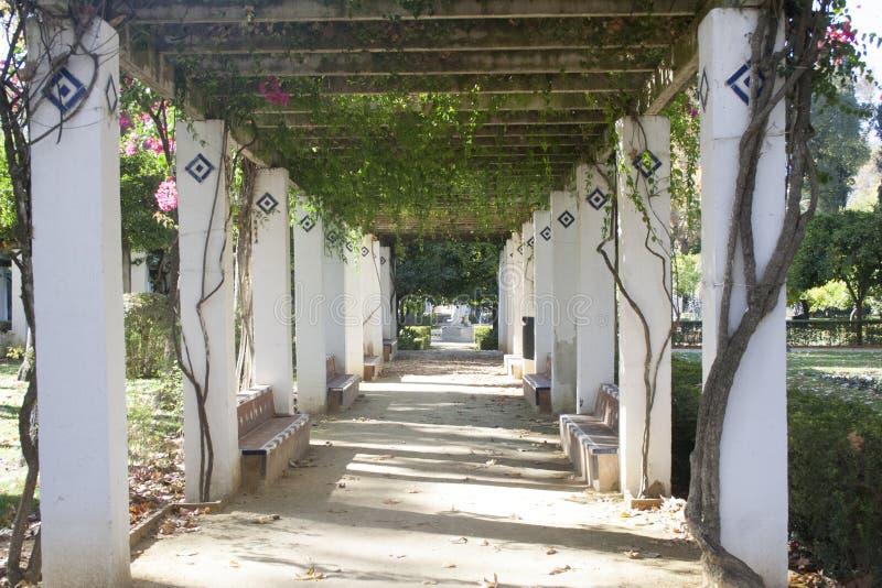 Corridoio in un parco fotografia stock libera da diritti