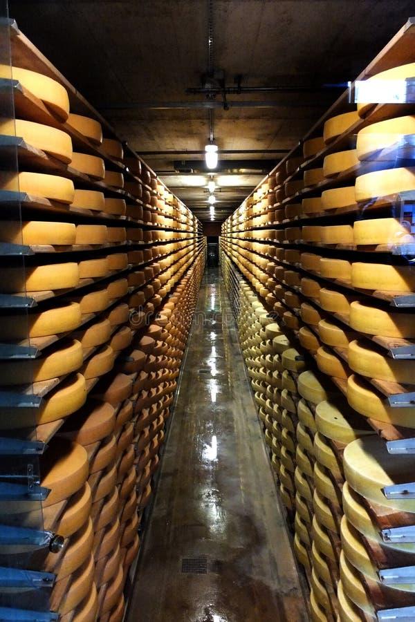 Corridor of Gruyere Cheese wheels. Stacked on shelves stock photo