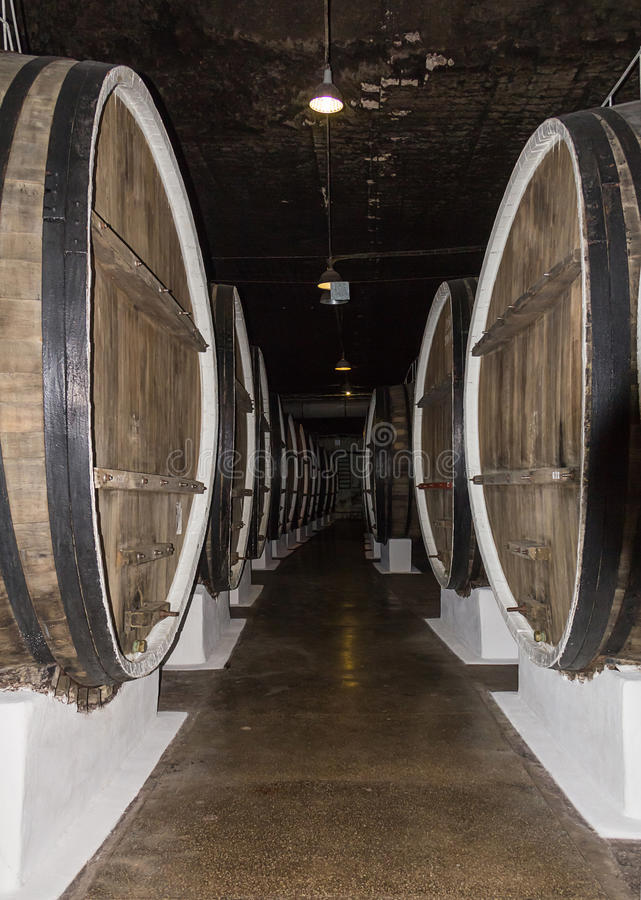 Corridor warehouse row of large wooden barrels of wine storage whiskey. In the basement royalty free stock photos
