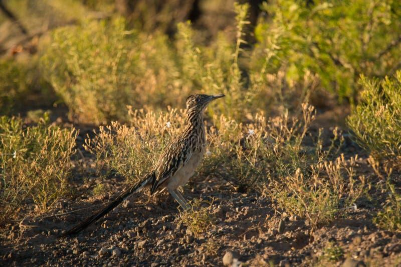 Download Corridore Di Strada Nel Deserto Del New Mexico Fotografia Stock - Immagine di copertura, sud: 55353492