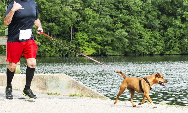 Corridore 10K di corsa con un cane intorno al lago fotografie stock