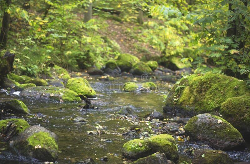 Corriente con stines en bosque de la caída imágenes de archivo libres de regalías