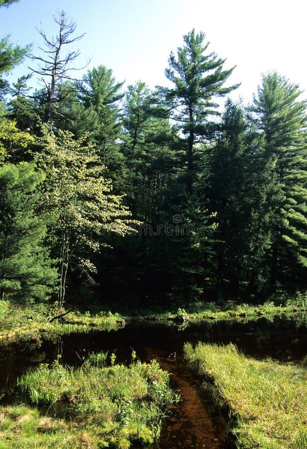 Corriente de Barrens del pino fotografía de archivo