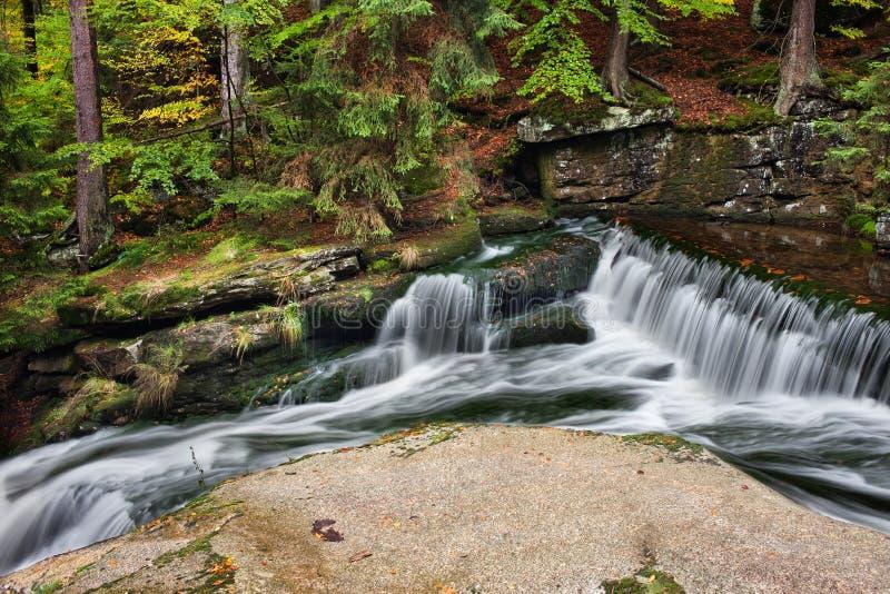 Corriente de conexión en cascada en bosque de la montaña imagen de archivo