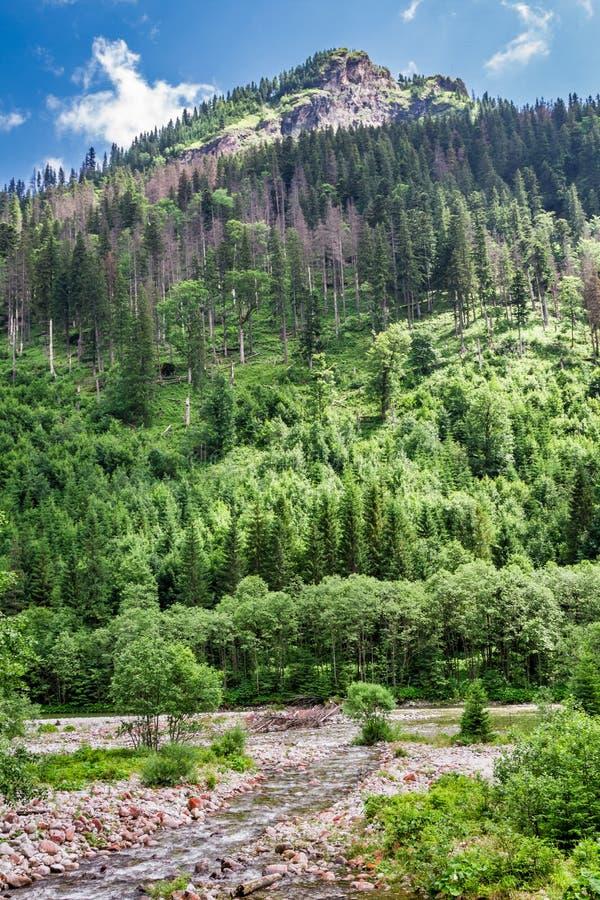 Corriente de la montaña en las colinas imagen de archivo
