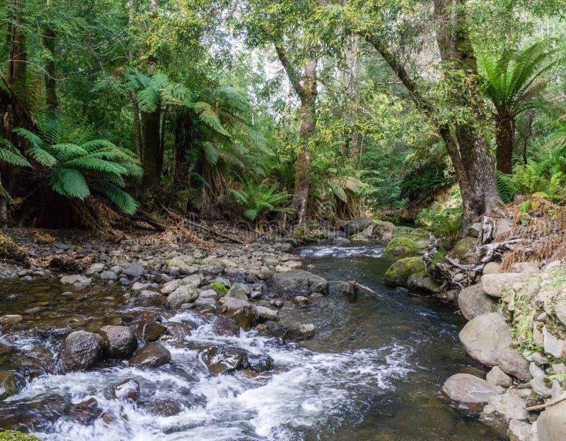 Corriente de la montaña en una selva tropical foto de archivo libre de regalías