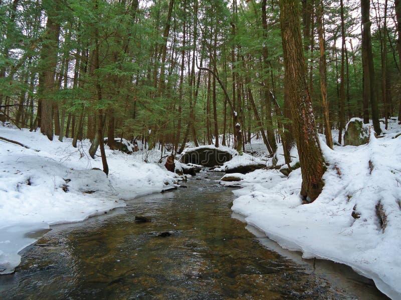 Corriente de la trucha del invierno fotografía de archivo libre de regalías