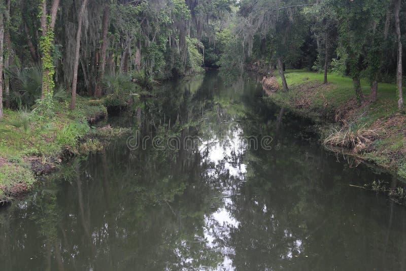 Corriente de los humedales de la Florida durante la lluvia ligera fotografía de archivo