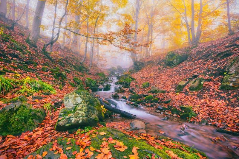 Corriente de niebla del bosque del otoño en el barranco de la montaña imagen de archivo