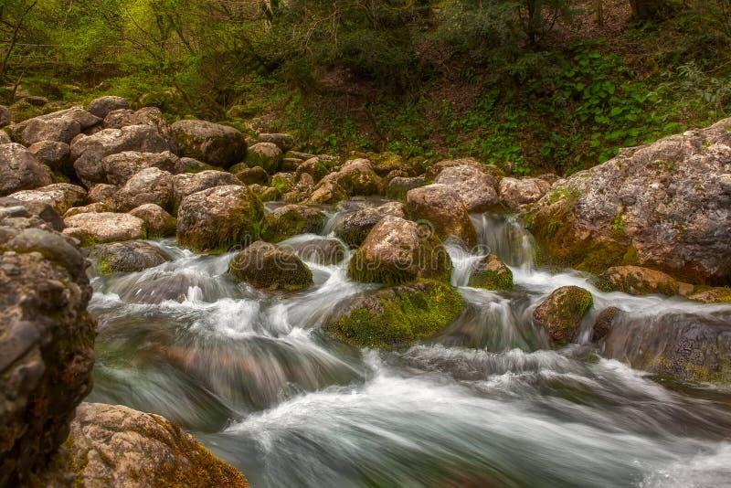 Corriente del agua de río de la montaña sobre rocas en el bosque imagen de archivo