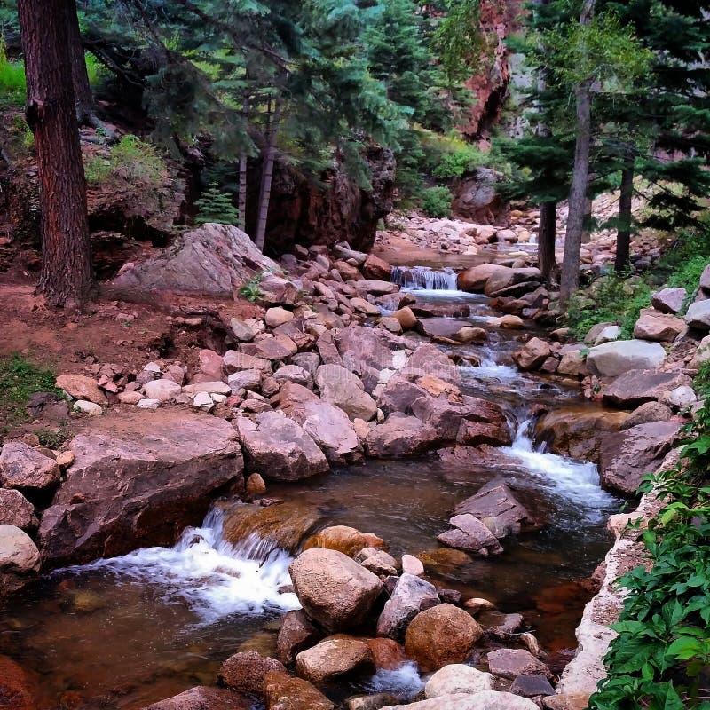 Corriente del agua en el bosque fotografía de archivo