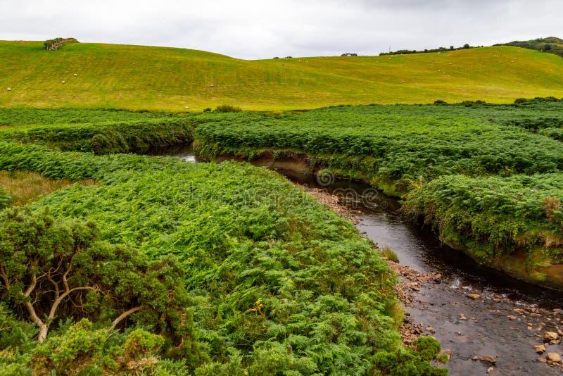 Corriente del agua en el medio de la vegetación con la manada de las ovejas en parte posterior fotos de archivo