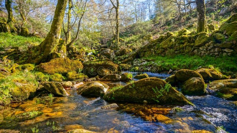 Corriente del agua potable en la composición de la naturaleza en Alvão, Portugal imagen de archivo libre de regalías