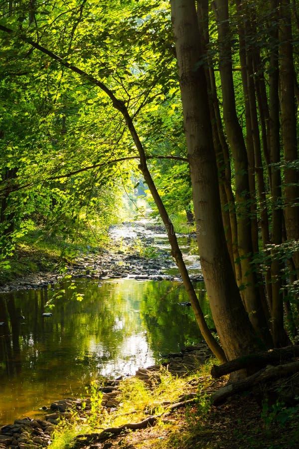 Corriente del bosque en luz del sol imágenes de archivo libres de regalías