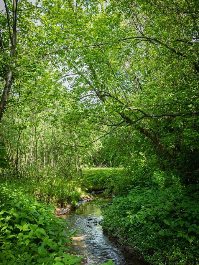 Corriente del bosque entre árboles en un día soleado fotos de archivo
