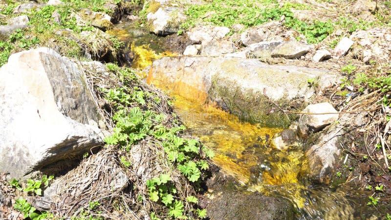 Corriente del bosque entre las plantas verdes y las piedras en un d?a soleado, belleza de la naturaleza media Paisaje hermoso del imagen de archivo libre de regalías