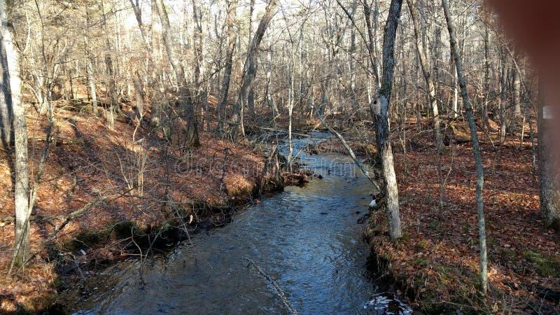 Corriente en el bosque foto de archivo