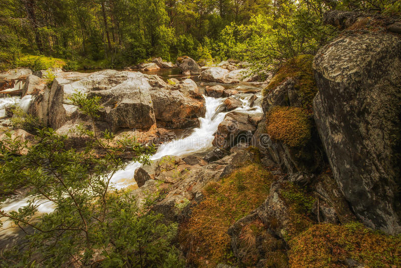 Corriente en el bosque salvaje imagen de archivo libre de regalías