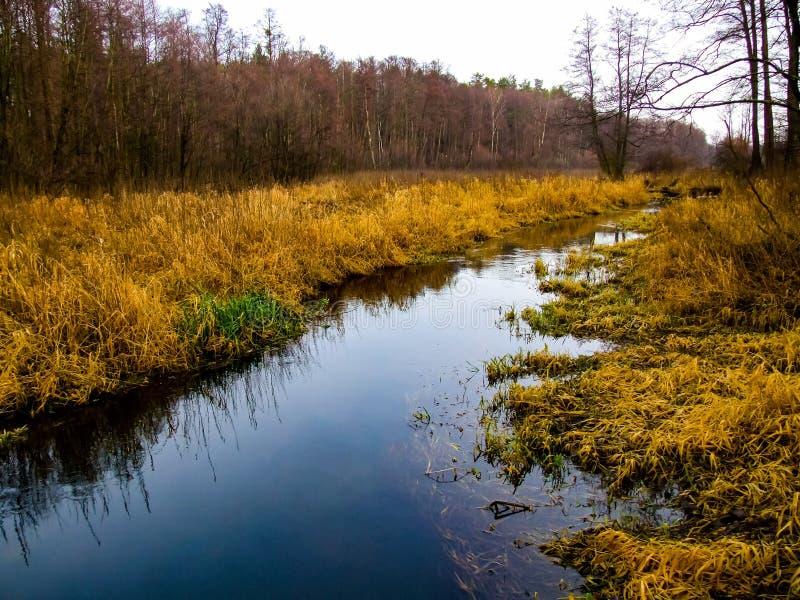 Corriente en el parque Krajobrazowy de Kozienicki en Polonia foto de archivo