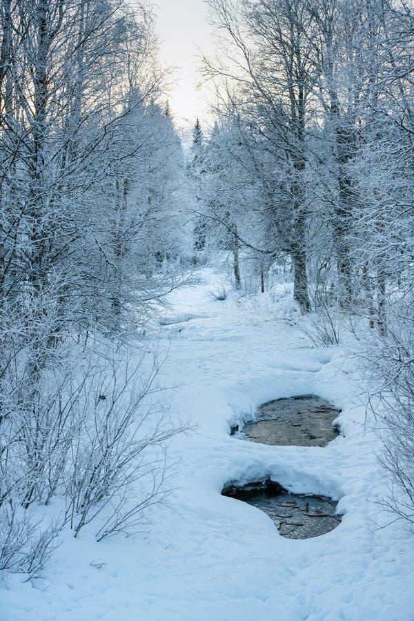 Corriente en Suecia septentrional, cubierta con hielo y nieve imágenes de archivo libres de regalías