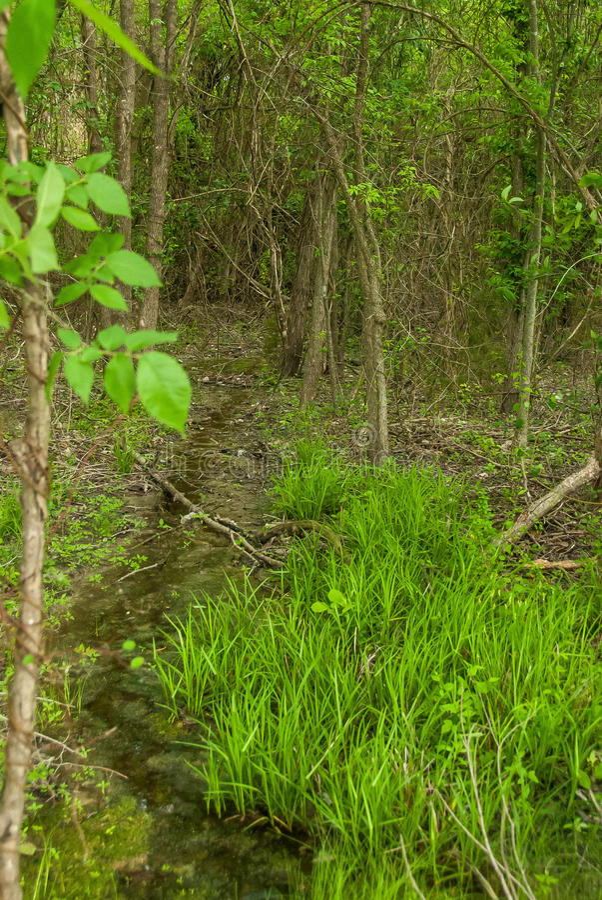 Corriente minúscula en el bosque denso fotografía de archivo libre de regalías