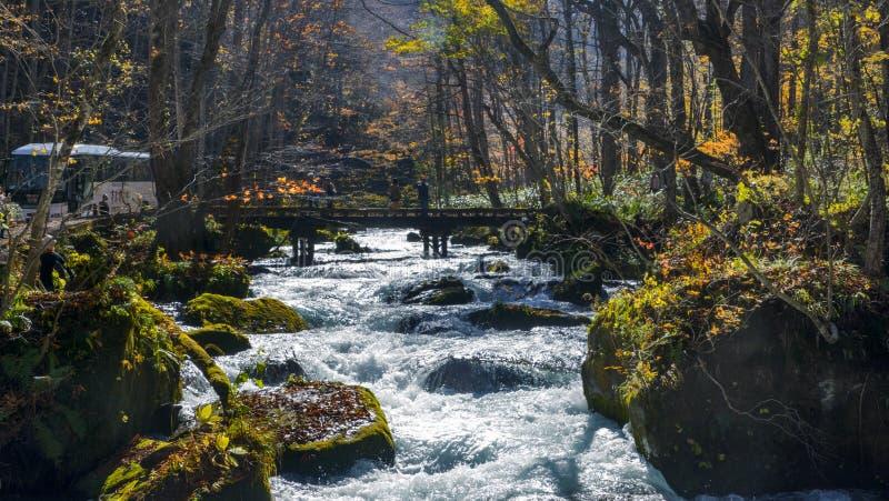 Corriente misteriosa de Oirase que atraviesa el bosque del otoño adentro a imágenes de archivo libres de regalías