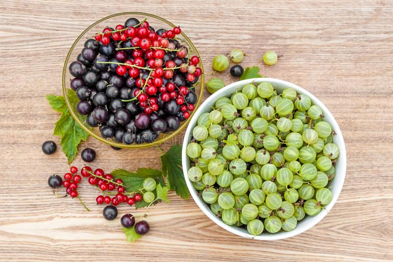 Corriente negra Corriente roja gooseberry Bayas cosechadas en cuencos imagen de archivo libre de regalías