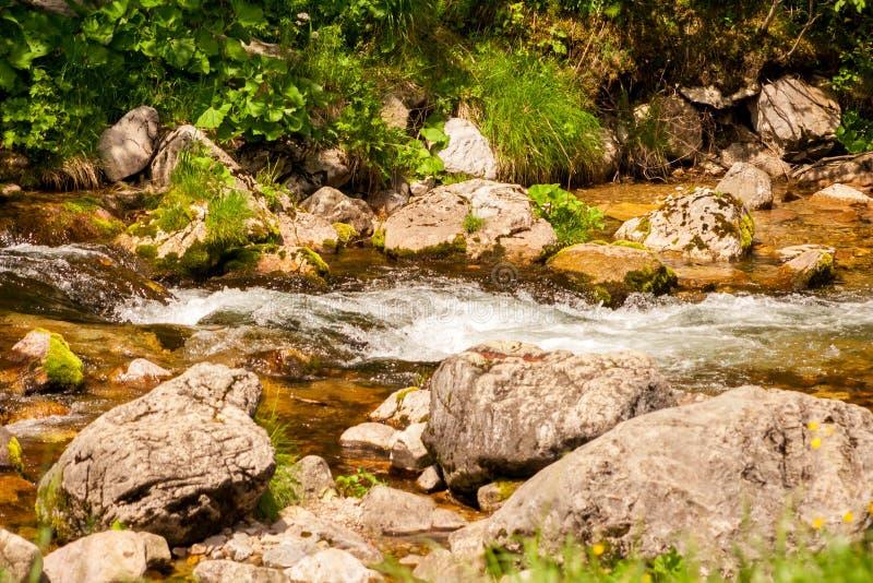 Corrientes del primer del agua entre las piedras de la montaña Corriente hermosa del río de la montaña con agua y las rocas fluíd imagenes de archivo
