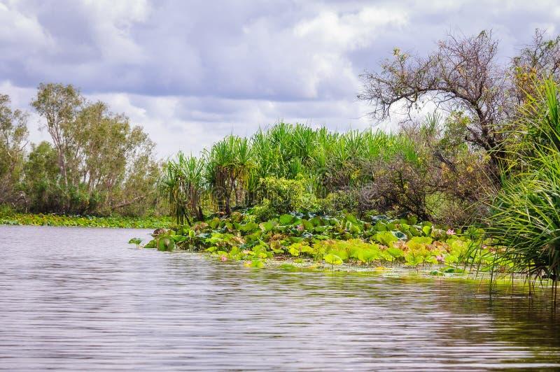 Corroboree Billabong no Território do Norte, Austrália é um paraíso para pássaros, peixes e outros animais selvagens fotografia de stock
