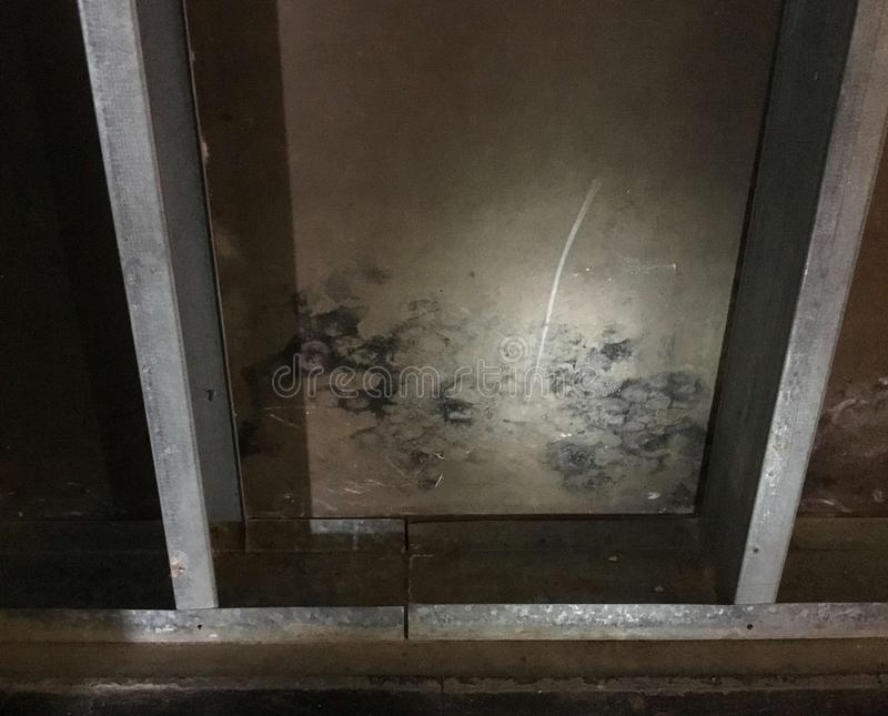 Corroded steel studs and mold on sheathing. After flooding stock photos