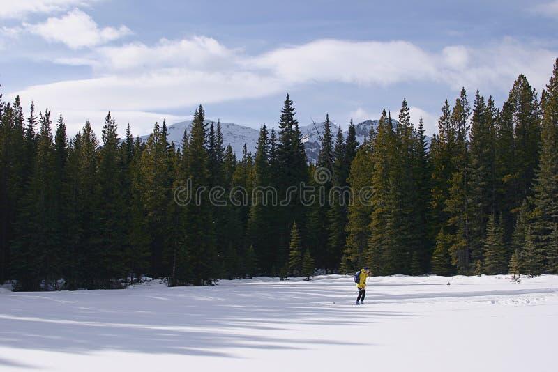 Corsa con gli sci del paese trasversale nelle montagne fotografia stock