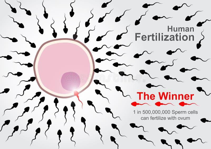 Corsa degli spermi da fertilizzare con uovo illustrazione vettoriale