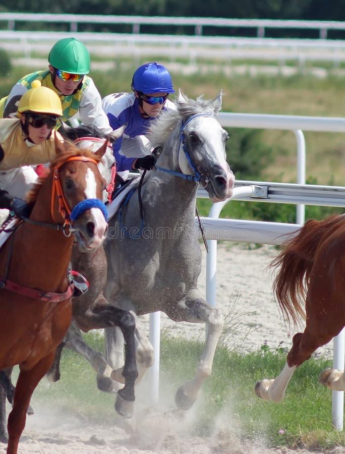 Corsa di cavalli. fotografia stock libera da diritti