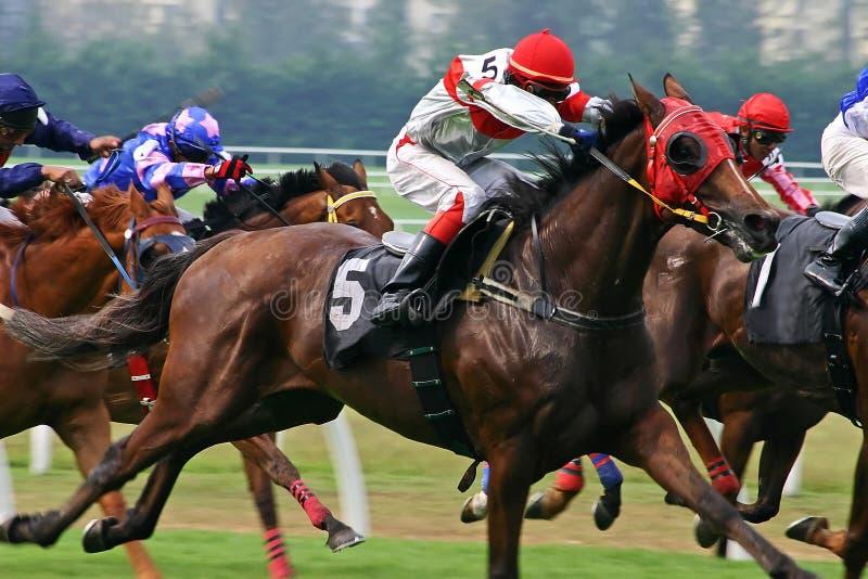 Corsa di cavalli immagine stock libera da diritti