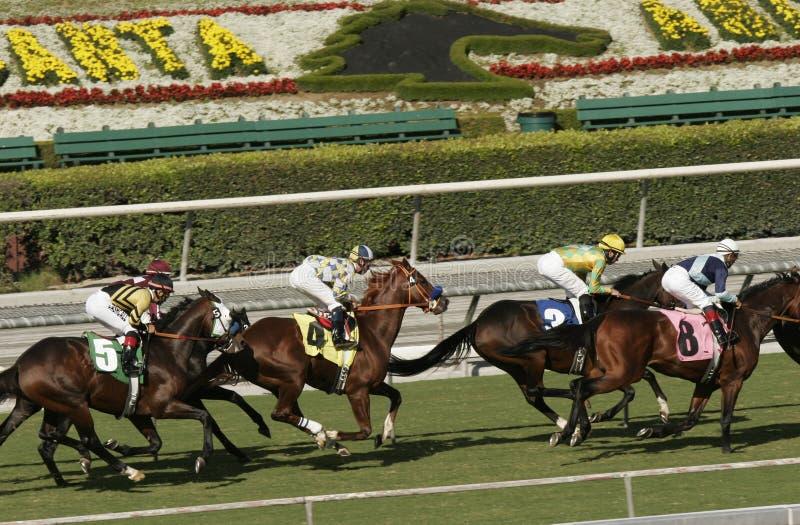 Corsa di cavalli alla bella pista di corsa della Santa Anita fotografia stock
