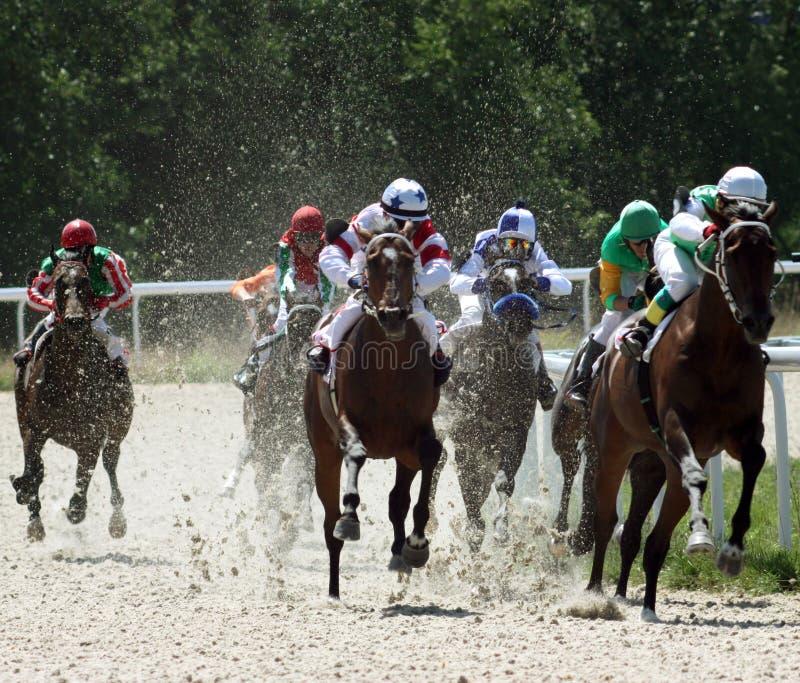 Corsa di cavallo. immagini stock