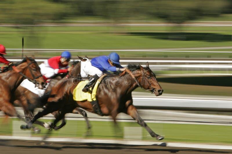 Corsa di cavallo astratta della sfuocatura di movimento fotografie stock libere da diritti
