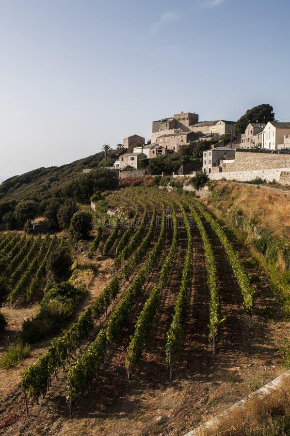 Haute Corse, Cape Corse, Corsica, Upper Corsica, France, Europe, island. Corsica, Haute Corse, 29/08/2017: skyline and view of the vineyards of Baragogna, one of stock image