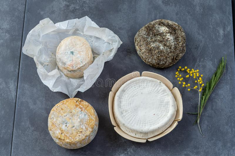 Corsican specialities varity of goat and sheep cheese with mimosa flower, on a grey slate background royalty free stock images