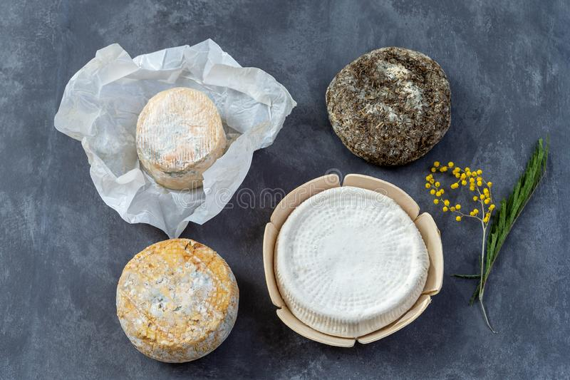 Corsican specialities varity of goat and sheep cheese with mimosa flower, on a grey slate background stock image