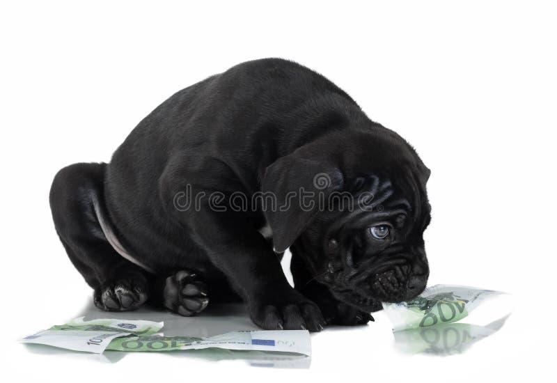 Corso del bastón del perrito imágenes de archivo libres de regalías