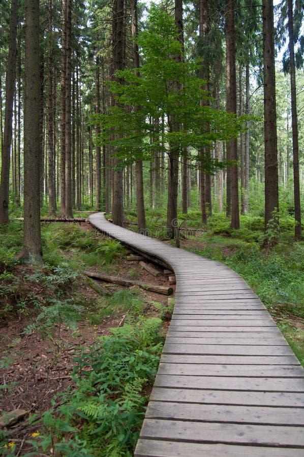 Corso di fasciame attraverso la foresta protetta fotografia stock libera da diritti