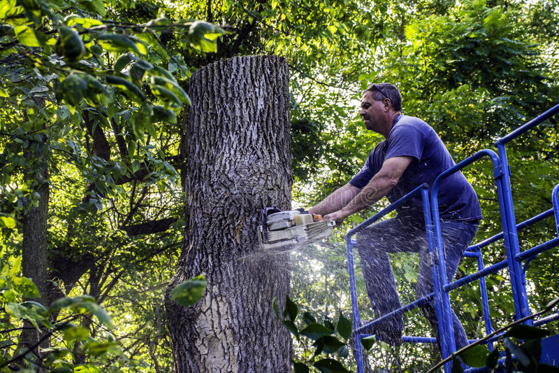 Cortador da árvore imagens de stock royalty free