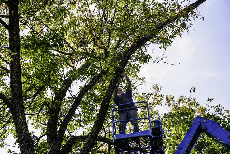 Cortador da árvore fotos de stock