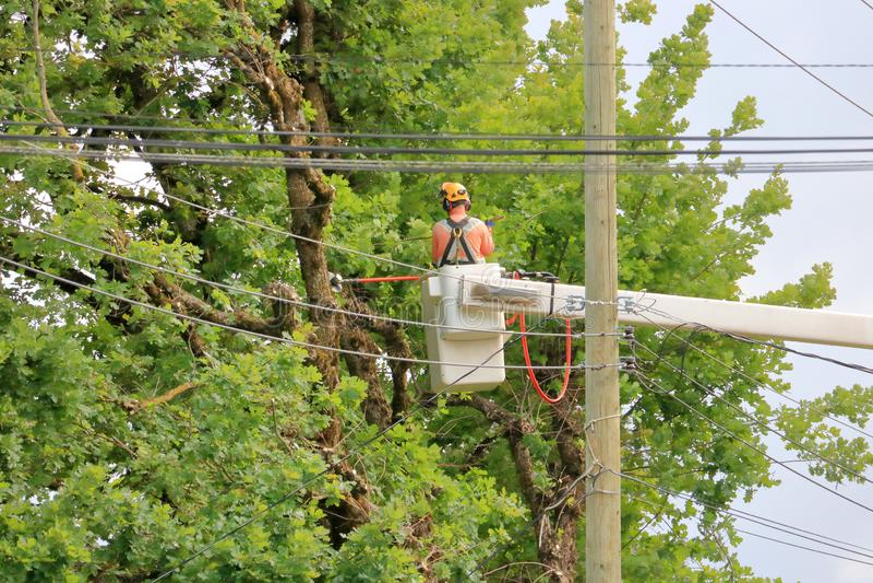 Cortador da árvore e fios elétricos fotos de stock royalty free