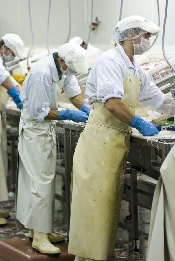 Cortadores dos peixes no trabalho foto de stock royalty free