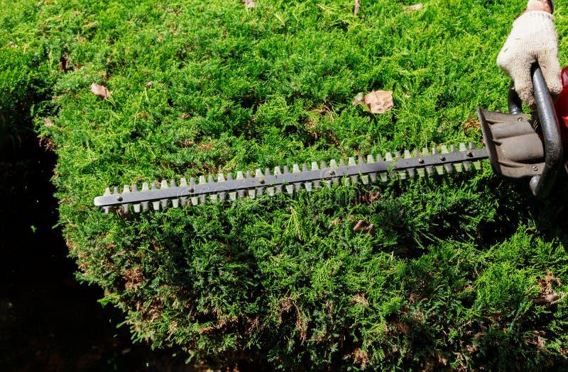 Cortar uma conversão com o jardineiro do ajustador de conversão está aparando ramos foto de stock royalty free