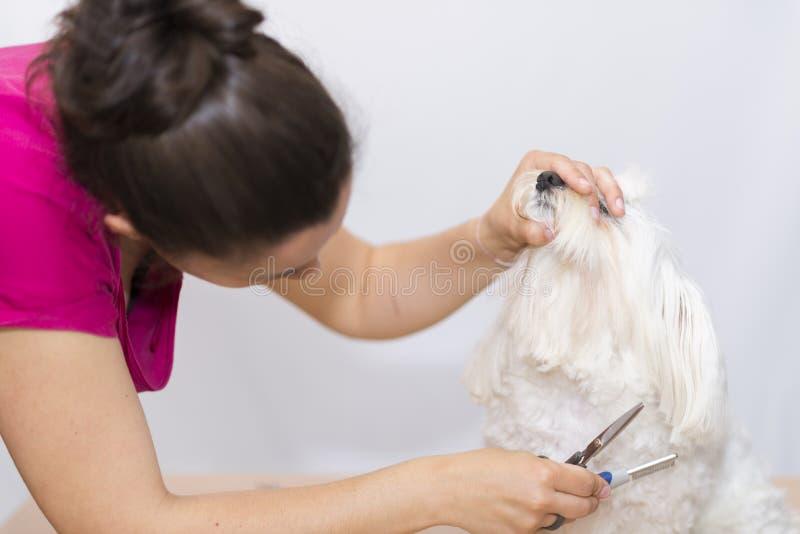 Corte canino del pelo foto de archivo libre de regalías