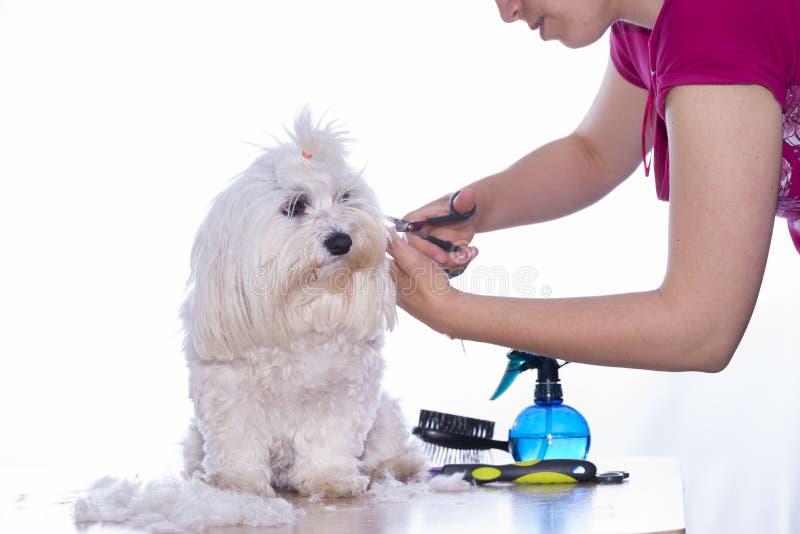 Corte canino do cabelo fotografia de stock