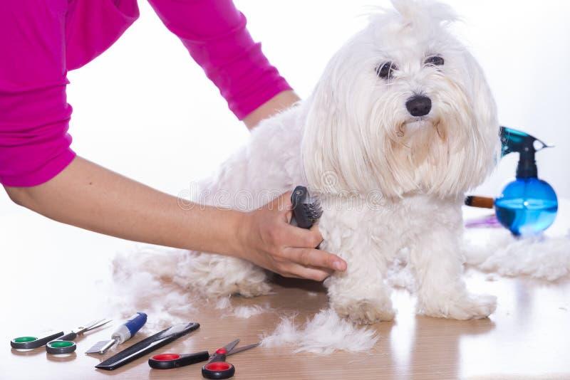 Corte canino do cabelo imagens de stock royalty free